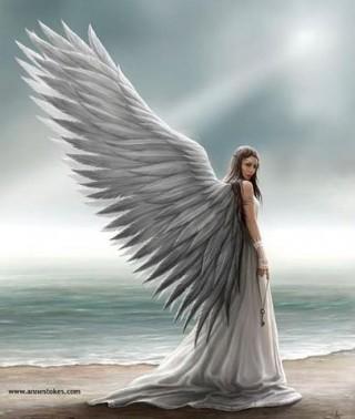 angelo1