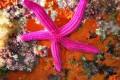 La leggenda della stella marina