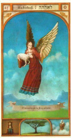 angelo 41