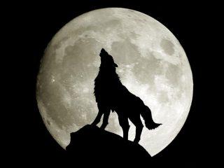luna-lupo