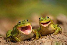 La storia delle due rane
