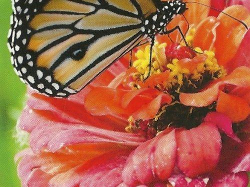 """I Messaggi delle Farfalle """"Crescita spirituale"""""""