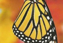 """I Messaggi delle Farfalle """"Cambiamenti del corpo"""""""