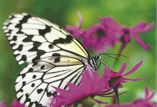 """I Messaggi delle Farfalle """"Chi cerca trova"""""""
