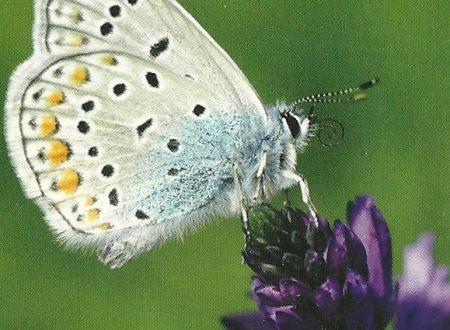 """I Messaggi delle Farfalle """"Cambia alimentazione"""""""
