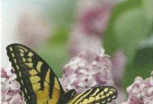 """I Messaggi delle Farfalle """"Fai il prossimo passo"""""""