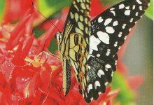 """I Messaggi delle Farfalle """"Fine di una fase"""""""