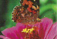 """I Messaggi delle Farfalle """"Forza Interiore"""""""