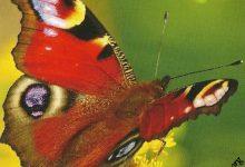 """I Messaggi delle Farfalle """"Hai cambiato idea"""""""