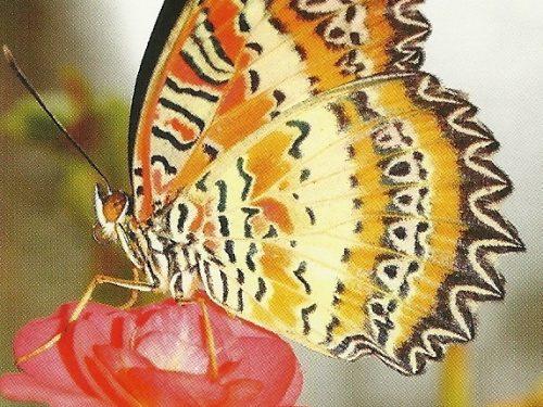 """I Messaggi delle Farfalle """"Invecchiare con eleganza"""""""