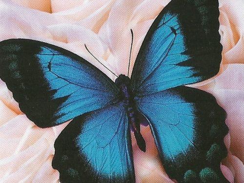 """I Messaggi delle Farfalle """"Religione e spiritualità"""""""