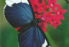 """I Messaggi delle Farfalle """"Soldi"""""""