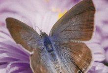 """I Messaggi delle Farfalle """"Coraggio"""""""