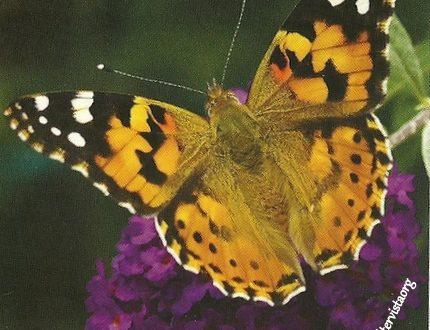 """I Messaggi delle Farfalle """"Dinamiche relazionali"""""""