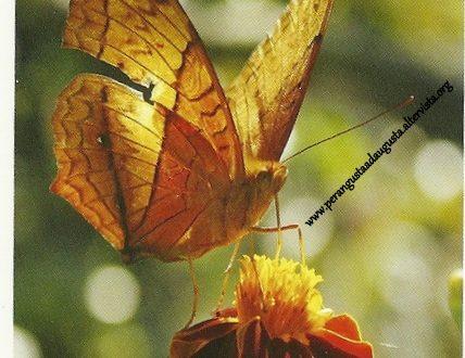 """I Messaggi delle Farfalle """"Cambia il tuo approccio alla salute"""""""