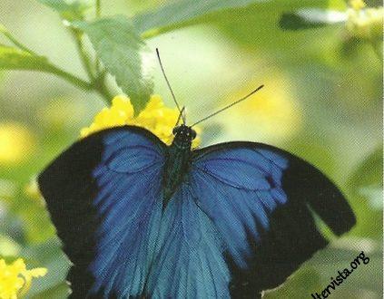 """I Messaggi delle Farfalle """"Comprensioni e rivelazioni"""""""