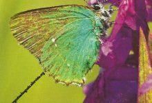 """I Messaggi delle Farfalle """"Perdono"""""""