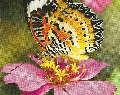 """I Messaggi delle Farfalle """"Segui la tua verita interiore"""""""