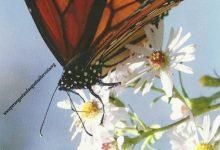 """I Messaggi delle Farfalle """"Sentimenti"""""""