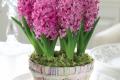 L'Energia curativa dei fiori: