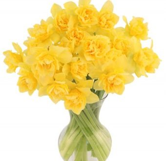 """L'Energia curativa dei fiori: """"Giunchiglia con l'Arcangelo Metraton"""""""