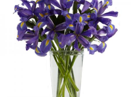 """L'Energia curativa dei fiori: """"Iris con l'Arcangelo Raffaele"""""""