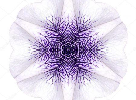 "L'Energia curativa dei fiori: ""Ipomea bianca con l'Arcangelo Sandalphon"""