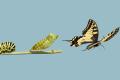 L'Impermanenza e i cicli della vita - E Tolle