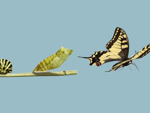 L'Impermanenza e i cicli della vita – E Tolle