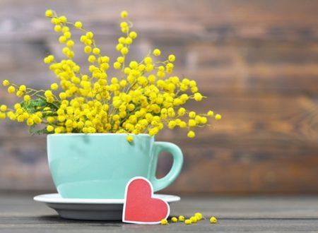 """L'Energia curativa dei fiori: """"Mimosa con l'Arcangelo Chamuel"""""""