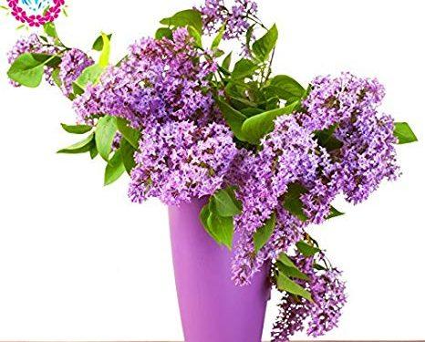 """L'Energia curativa dei fiori: """"Lillà con l'Arcangelo Michele"""""""