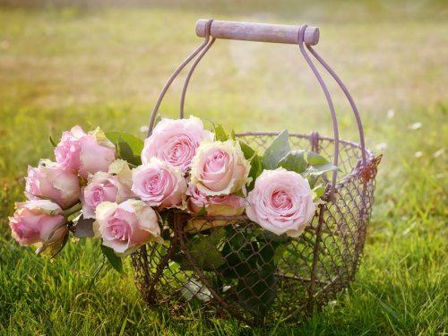 Non devi cambiare il mondo intero, basta togliere le erbacce dal tuo giardino