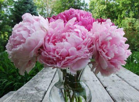 "L'Energia curativa dei fiori: ""Peonia con l'Arcangelo Sandalphon"""