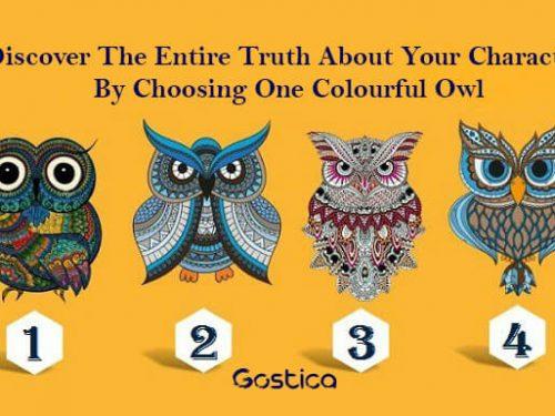 Test: Scegli un gufo colorato e scopri la verità sul tuo carattere