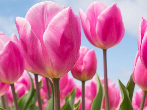 Louise Hay: Le Affermazioni Positive di Aprile